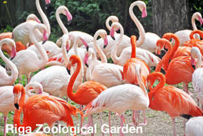 Riga Sightseeing - Zoological Garden